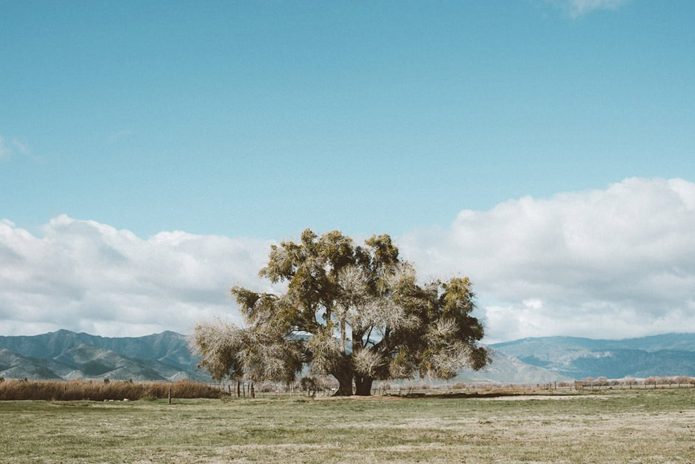 Lone Tree Photographic Print - Wall Art by Deb Boots