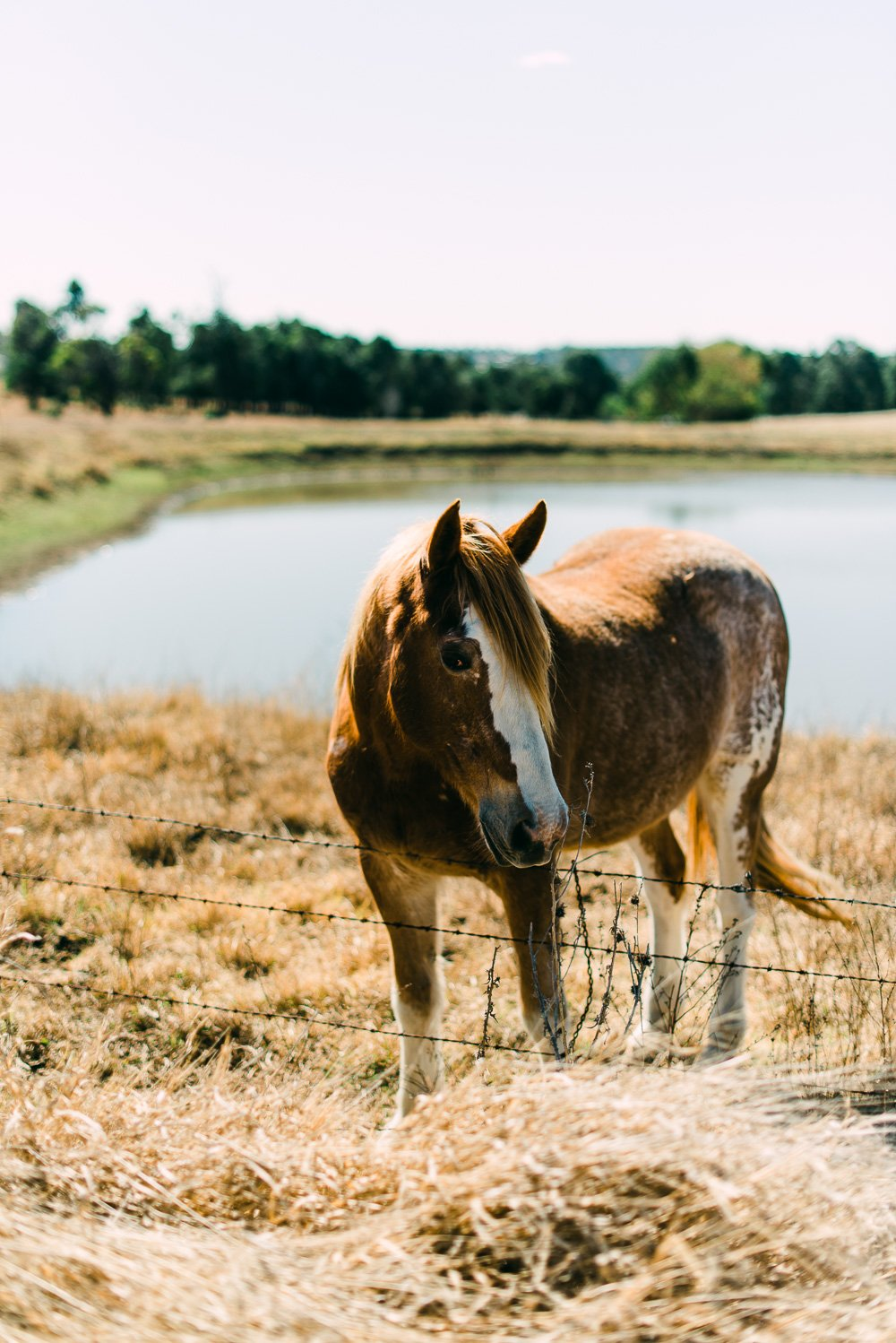 horse in paddock, Boonah countryside - Travel Photographer Deb Boots