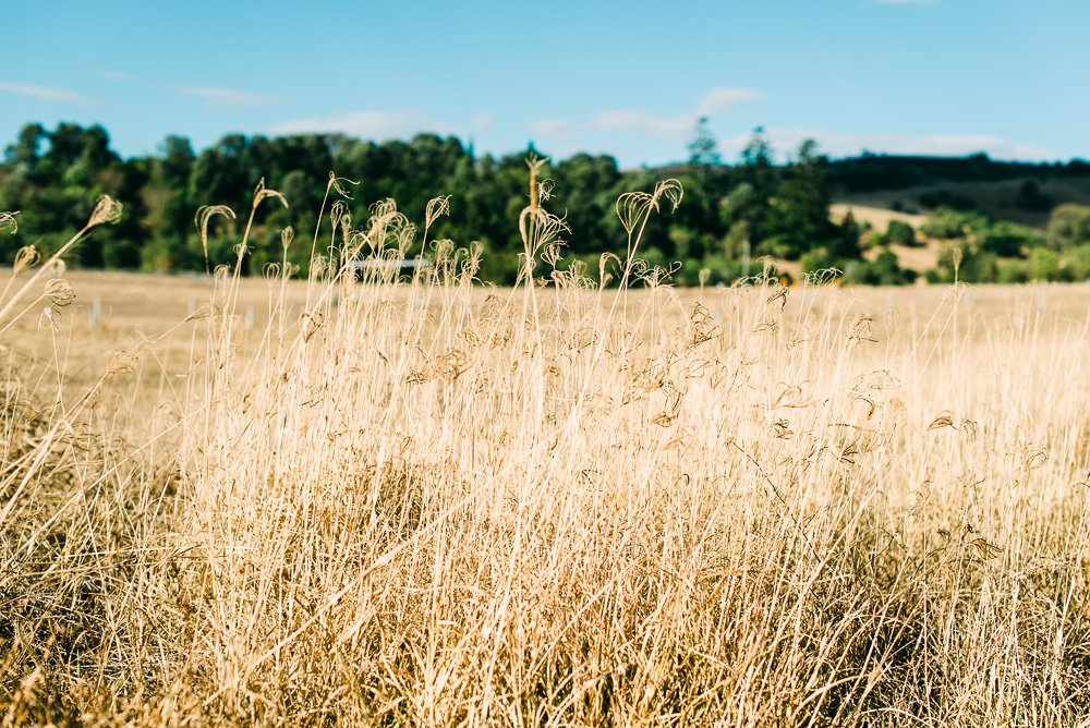 long grass in paddock, Boonah countryside - Travel Photographer Deb Boots