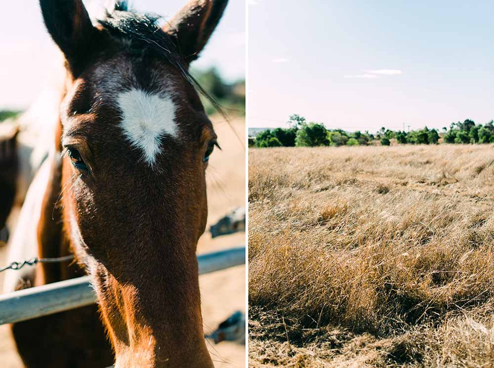 horses in paddock, Boonah countryside - Travel Photographer Deb Boots