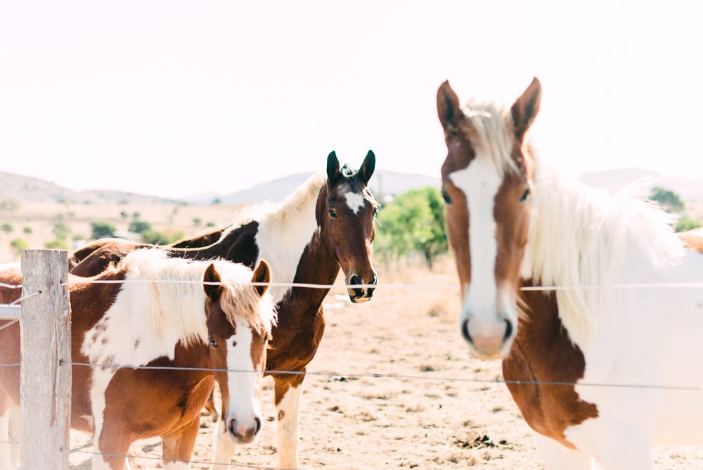 Horses in Boonah country Queensland - NSW Wedding & Travel Photographer Deb Boots