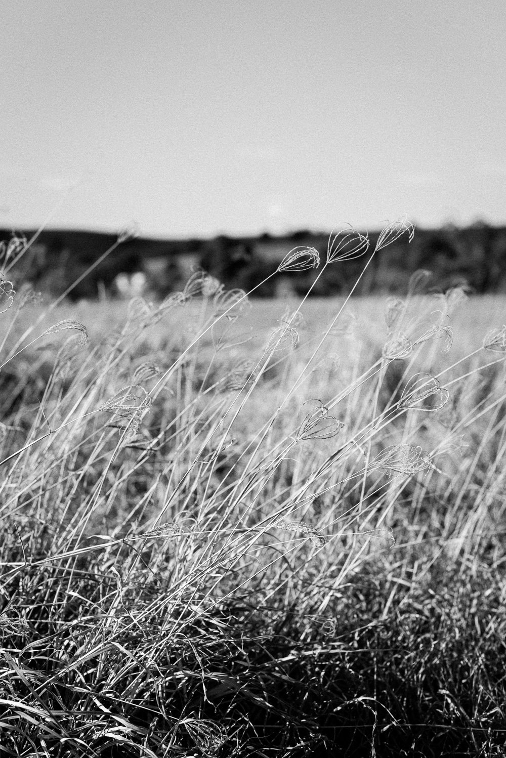 black & white photo of long grass in paddock, Boonah countryside - Travel Photographer Deb Boots