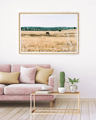 Lone Horse In Paddock Photograhpic Print - Framed Print In Living Room