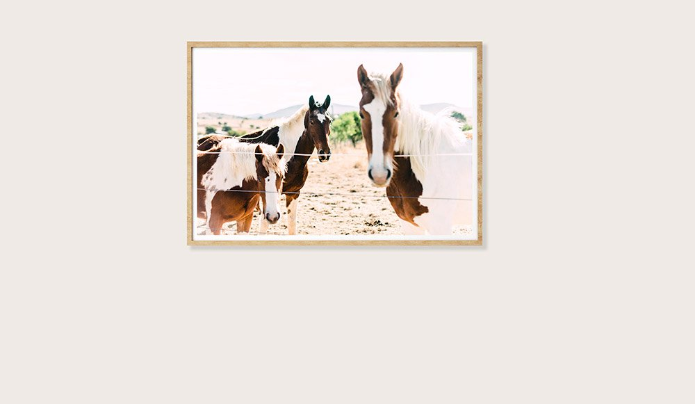 Paint Horse Trio Colour Photograhpic Print - Framed Print